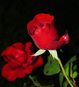 LA VIE EN ROSE(12)